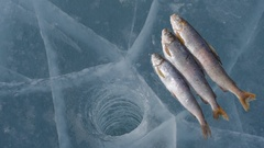 Winter fishing on the lake. Stock Footage