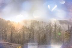 Winter forest.Instagram filter Kuvituskuvat