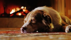 Cute dog dozing in a cozy house near the fireplace Stock Footage