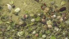 Bivalves and gastropods molluscan seashells swaying under water near shore 4k Stock Footage