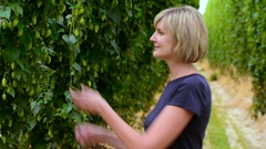 Woman checking hop cones in the hop field Stock Footage