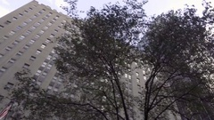 Buildings behind trees and leaves driving upward angle in Manhattan NYC Stock Footage