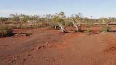 Trees growing in completely dry river bed in Australian outback Stock Footage
