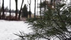 Pine needles near farm in snowy landscape Stock Footage