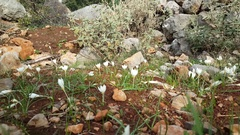 White flower in between the rocks Stock Footage