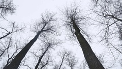 Dry tops of trees in the winter forest, landscape on the background nature of Stock Footage