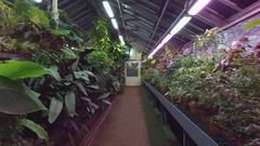 Greenhouse with tropical plants Stock Footage