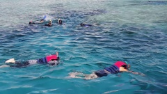 Snorkeling swim in the Red Sea Stock Footage