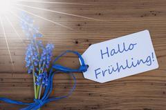 Sunny Grape Hyacinth, Label, Hallo Fruehling Means Hello Spring Stock Photos