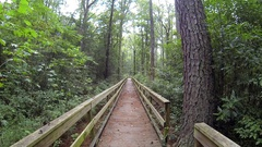 Hiking Trail Boardwalk Through Forest Great Dismal Swamp National Refuge Stock Footage