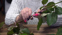 Florist prapering rose for bouquet Stock Footage