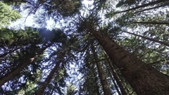 Moving pov under giant redwood trees Stock Footage