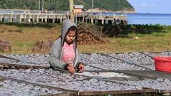 Thai woman lays squid drying in the fishing village. Koh Phangan, Thailand Stock Footage
