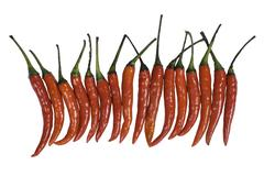 Capsicum frutescens Linn Stock Photos