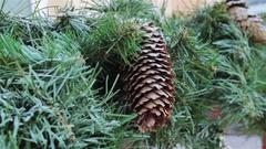 Pinecone Christmas tree Stock Footage