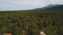 Aerial view Coconut palm trees plantation in Philippines Stock Footage