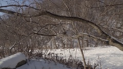 A park trail covered in snow after a storm. 4K UHD. Stock Footage