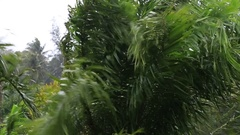 Tropical rain drops falling on the green palm tree leaves in Thailand Stock Footage
