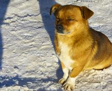 Small frozen non-pedigreed dog on snow in winter Stock Photos