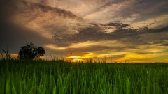 4K high definition of sunset at field with rain drop at the tip of the grass Stock Footage