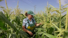 Woman examines corn plants Stock Footage