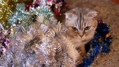 Scottish fold cat and christmas tinsel Stock Footage