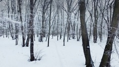 Fly over winter forest in foggy weather Stock Footage