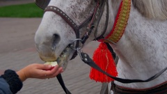 Horse Eats an Apple with a Human Hand Stock Footage