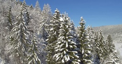 4K Aerial Close To Wide Slow-Mo Of Pine Forest In The Winter Stock Footage