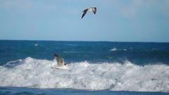 Ocean sea bird seagulls Arkistovideo