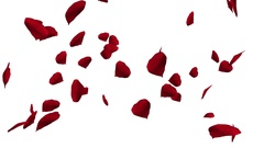 Falling and swirling red rose petals over white background. Stock Footage