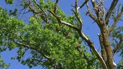 Dry Tree 2 Stock Footage