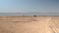 FPV: Tourist safari jeep game driving in arid savannah grassland in Ngorongoro Stock Footage
