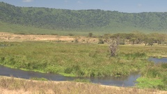 Hippopotamus soaking in Ngoitokitok spring lake in Ngorongoro national park Stock Footage
