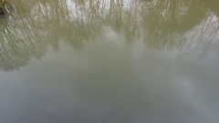 Tree reflections on murky water. Stock Footage