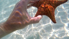 Hand of a snorkeler with the  cushion starfish (Oreaster reticulatus). Caribbean Stock Footage