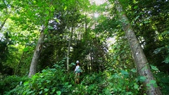 Hiker Girl Walks in Forest Path Stock Footage