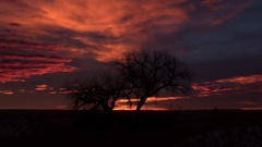 Dawn Clouds over Cottonwood Tree Timelapse Zoom Out Stock Footage