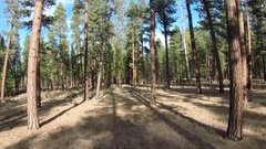 Drone footage of Ponderosa pine Stock Footage