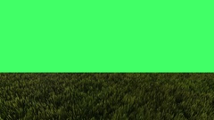 Green field on green screen in background Stock Footage