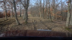 By car on muddy roads of a leafless forest in the end of autumn Stock Footage