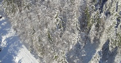 Tree Tops Of Pine Trees Covered In Snow Stock Footage
