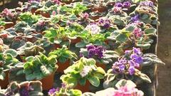 Background of flowerpots in gardenhouse 4K Stock Footage