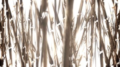 Animated Bamboo Field in a Water Color Style Stock Footage