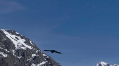 Black crows flying in the blue sky above the abysses of snow covered m Stock Footage
