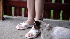 Burmese cat who stroked the legs of a girl sitting on a terrace  Stock Footage