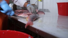 Cutting fish fillet seafood distribution Stock Footage