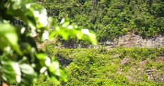 Rock face in rain forest Stock Footage