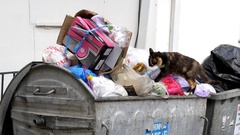 Brown cat with black and white looking in a trash dumpster Stock Footage