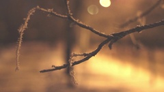 Frozen Branch in The Snow Against The Backdrop of the Streets Stock Footage